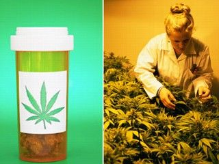 marijuana-contra-cancer