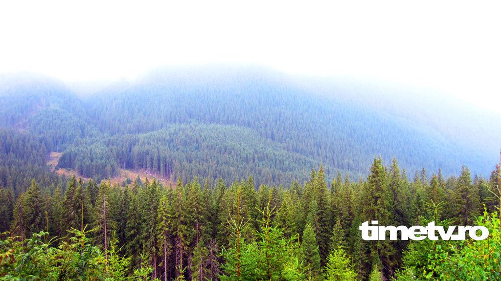 transalpina-drumul-regelui-regal-poteca-dracului-paduri-ceata