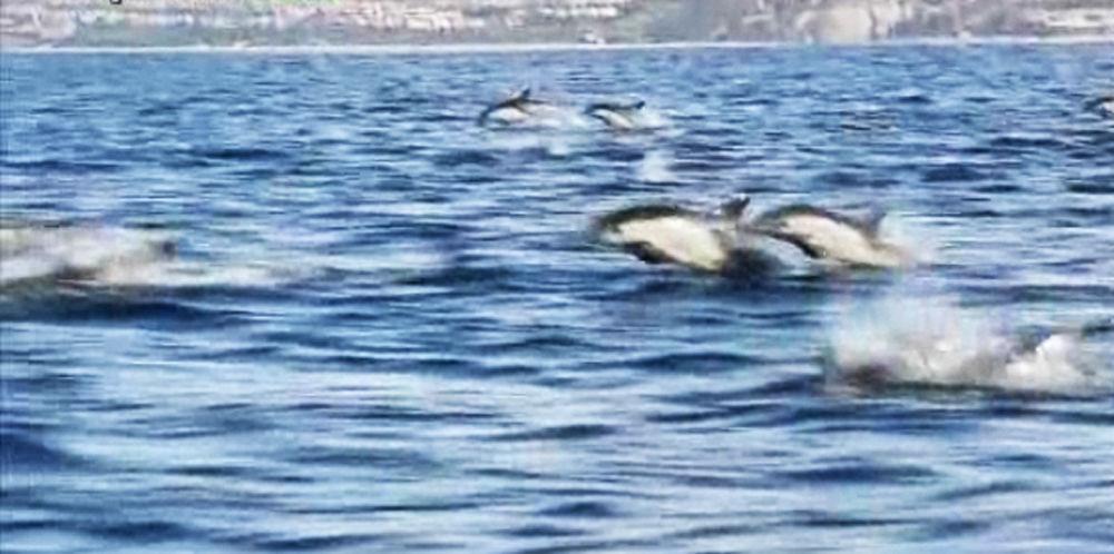 animalele-oceanelor-mamifere-sute-de-delfini-oceanul-pacific-california-timetv