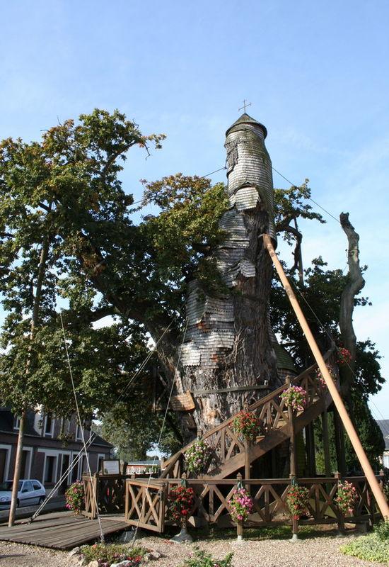 copacul-capela-timetv