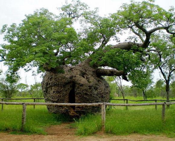 copac-aborigen-timetv