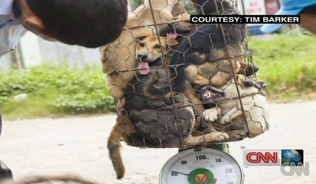 trafic-caini-custi-consum-tailanda-mancati-traficul-ilegal-cu-câini