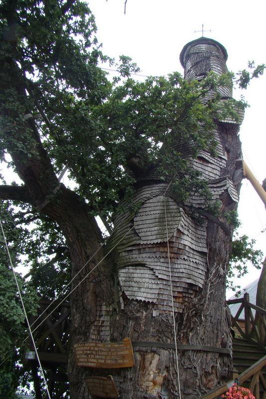 copacul capela-timetv