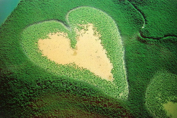 mangrove in forma de inima-timetv