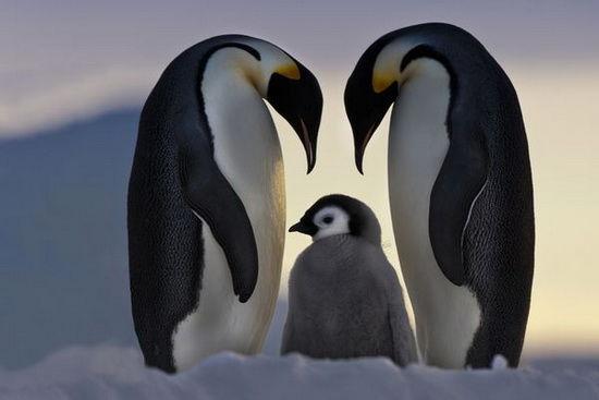 antarctica-timetv