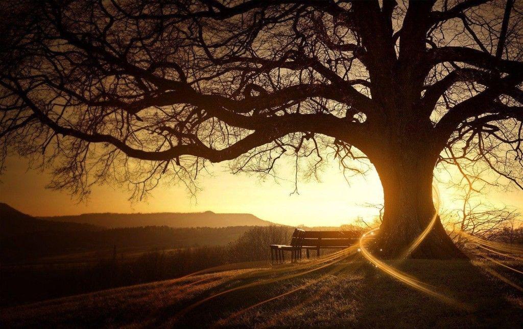 timetv copac personal development dezvoltare personala dezvoltare spirituala