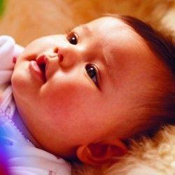 embrion