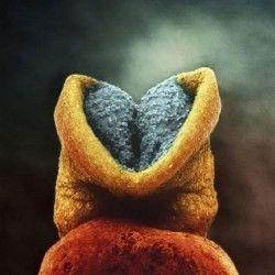 Embrionul are 22 de zile. Partea de culoaresură va fi capul micuțului