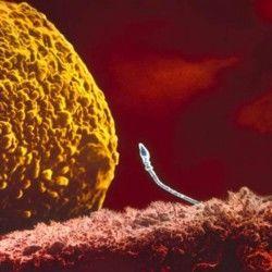 unul dintre 200 de milioane de spermatozoizi sparge membrana ovulului