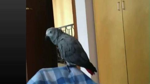 papagal-conecte-r