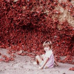 red-crabs-
